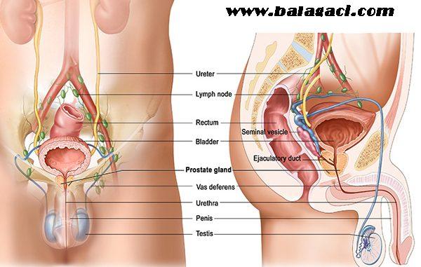 Prostat belirtileri nelerdir, Prostat nedir, Prostat nasıl tedavi edilir