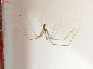 evde örümcek olması nedenleri, evde örümcek görülmesi, örümcekler neden eve yerleşir